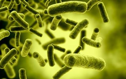 Esta es la cantidad de bacterias que viven dentro de nuestro organismo y así afectan nuestro peso