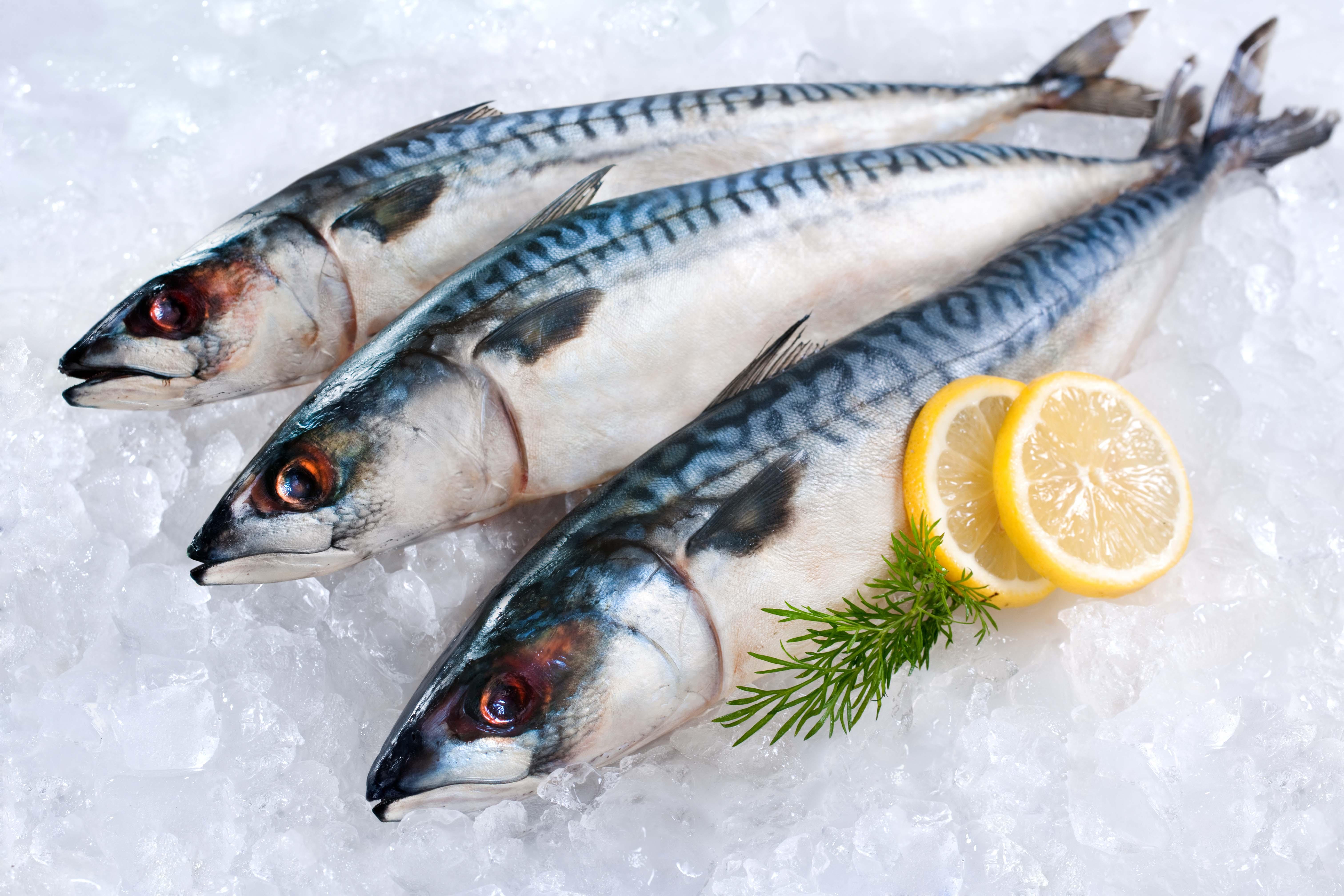 Estos son los beneficios de comer sardinas