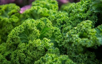 Los maravillosos beneficios del aguacate y el kale