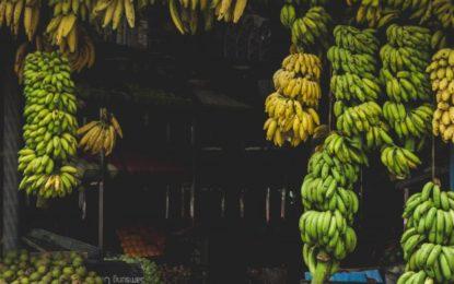 Mangos y plátanos verdes podrían ayudar a prevenir el cáncer de colon
