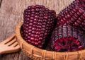 Maíz Morado contribuye a la prevención del cáncer y enfermedades cardiovasculares
